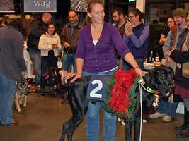 A Great Dane dressed like a Kentucky Derby winning horse won the costume contest at Planet Dog in Portland on Tuesday night. The winner's owner received a $100 gift certificate to the store.