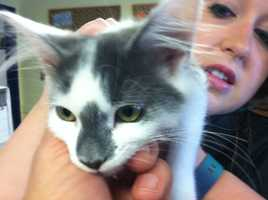 The shelter said it received numerous adoption requests.