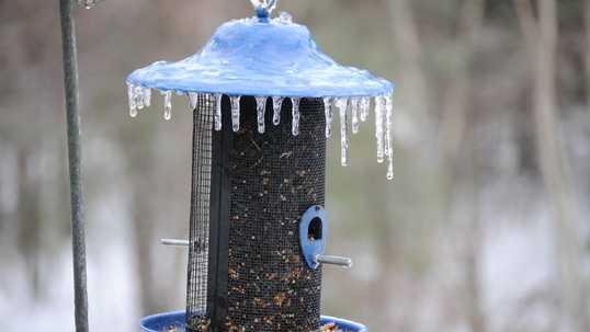 Cold Bird Feeder.jpg