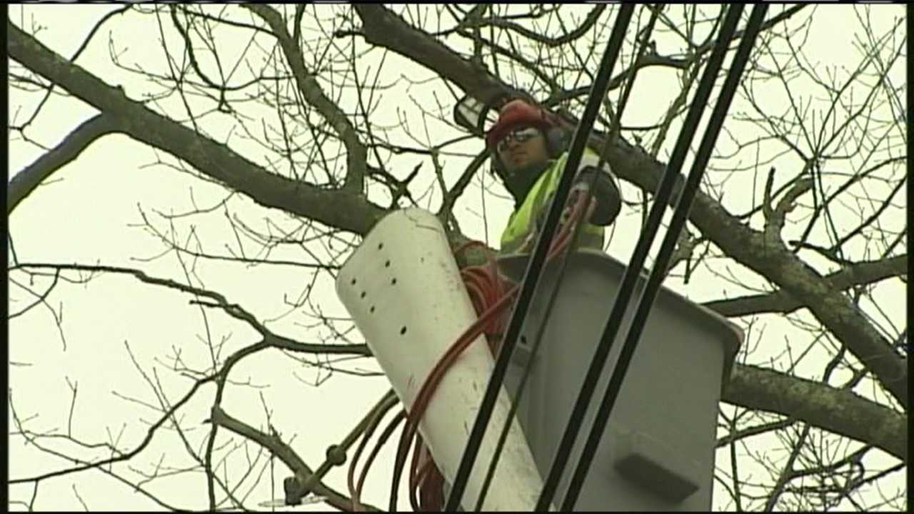 img-CMP institutes tree trimming program to expedite outages