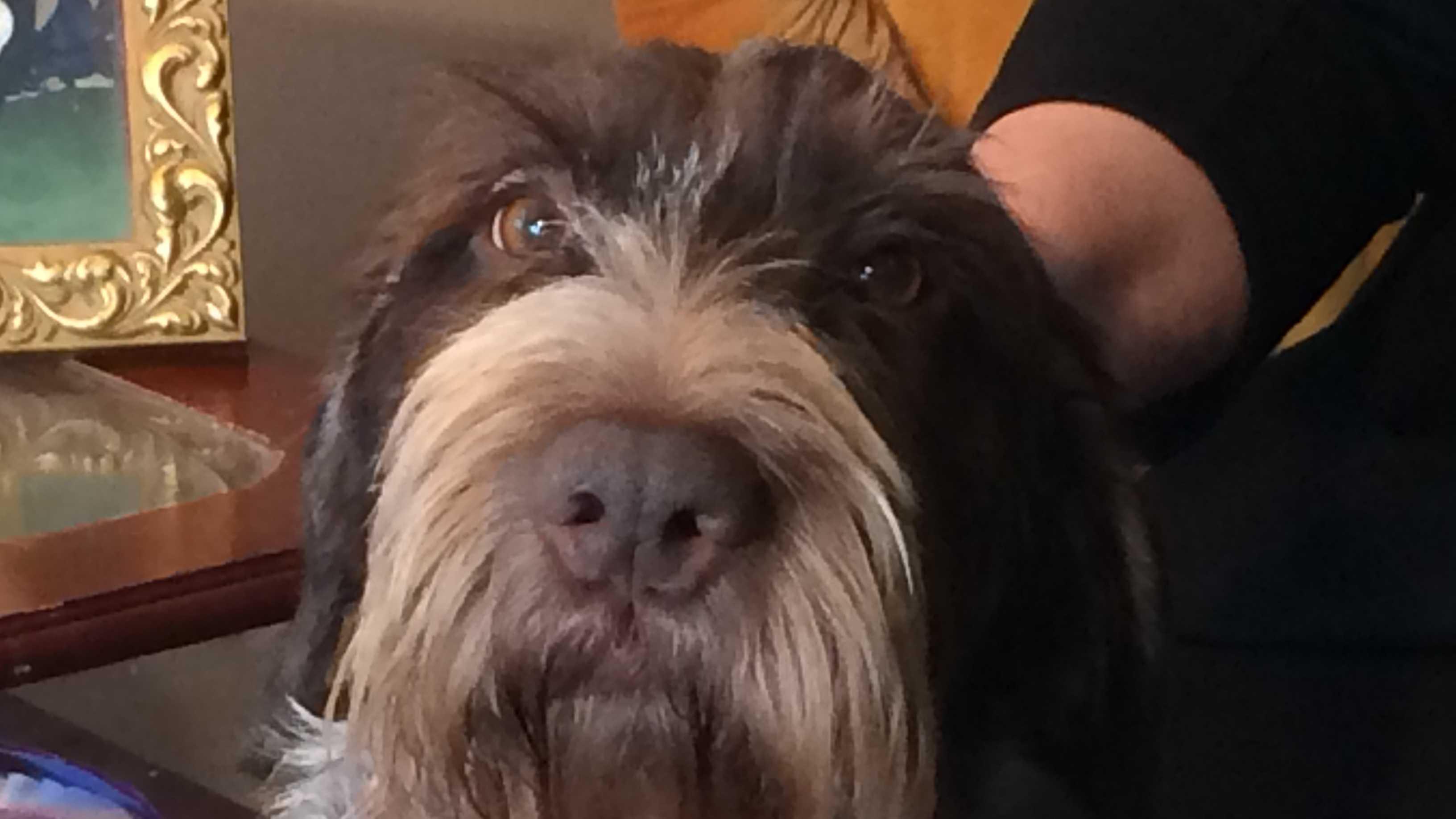 Sookie the dog