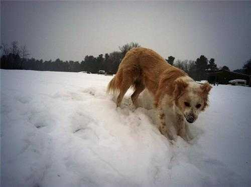 This pup in Oxford is loving the fresh snow! We're about to see a lot more of it here in the next few hours