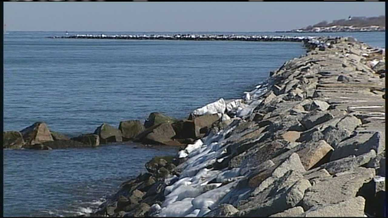 img-Piping plovers put Saco erosion plan on hold