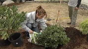 WMTW News 8's Norm Karkos talks about planting bushes and shrubs. Click here to watch.