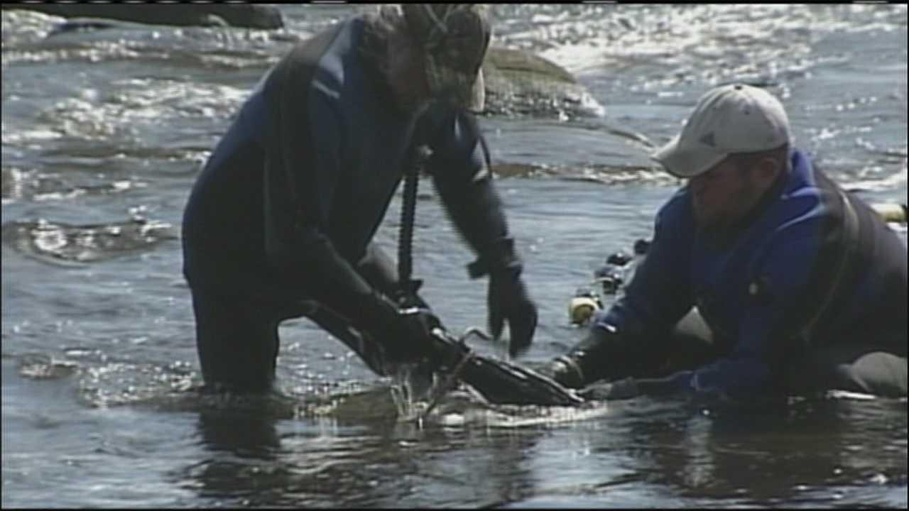 img-Weather low prices hurt lucrative baby eel market