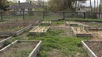 WMTW News 8's Norm Karkos talks about vegetable gardens. Click here to watch.