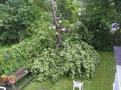 Maple Tree down in Rumford