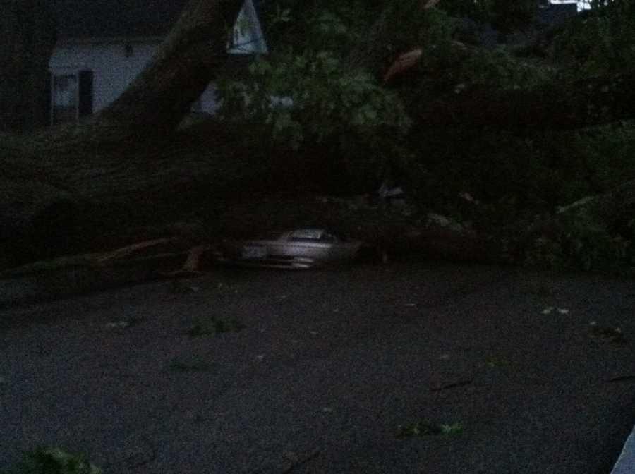 Tree falls on car in York