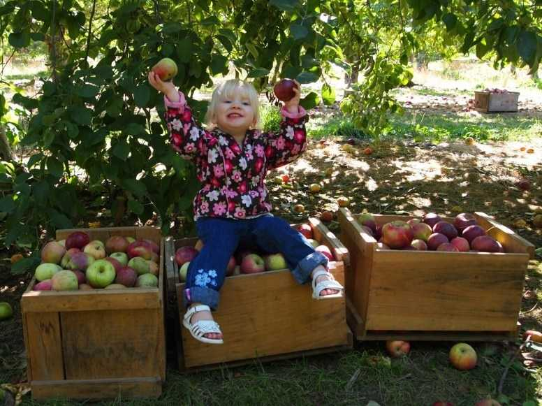 Go apple picking in the fall