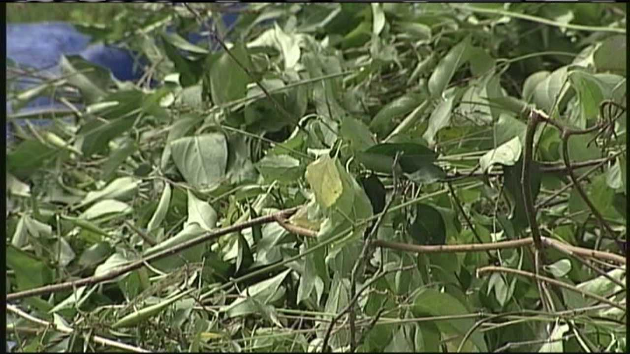 img-Group leads walk to educate on invasive plants