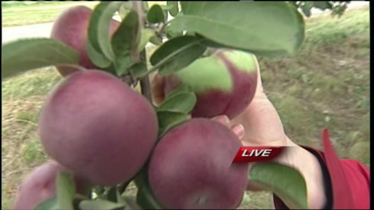 Whether you prefer cortlands, macintosh or honey crisp, now is the perfect time to head out to your local orchard and pick some apples. WMTW News 8's Morgan Sturdivant has more from Wallingford's Fruit House in Auburn.
