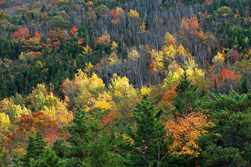 Cadillac Mountain at Acadia National Park