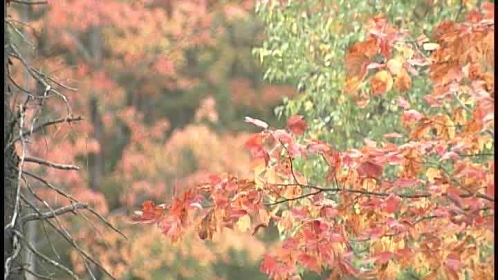 Meteorologist Matt Zidle has the fall foliage report for the weekend of Oct. 4-5.