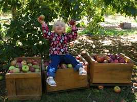 Go apple picking at any of the many orchards across the state.