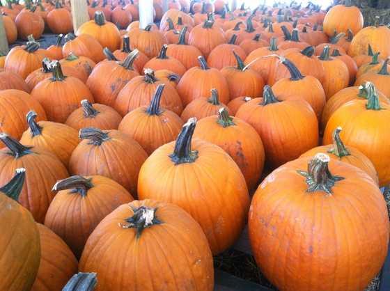 Pick your own pumpkin.