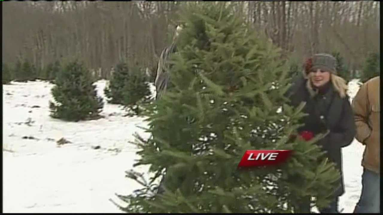 With a little more than two weeks until Christmas, you still have time to get that perfect tree. But how do you know what to look for? WMTW News 8's Morgan Sturdivant has tips from the Merry Christmas Tree Farm in Windham.