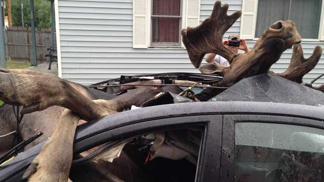 8: A Skowhegan man survived after colliding with this moose in northern Maine in July. Click here for the story.