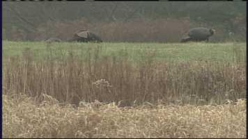 May 4: Spring turkey hunting season begins.