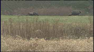 Oct. 1: Fall turkey hunting season begins.