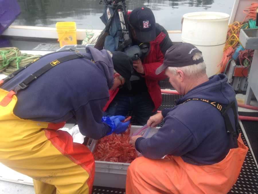 On Tuesday, Gamage went out on his last trip to collect shrimp for state scientists. WMTW News 8 reporter Paul Merrill and photographer Kevyn Fowler joined Gamage on the trip.