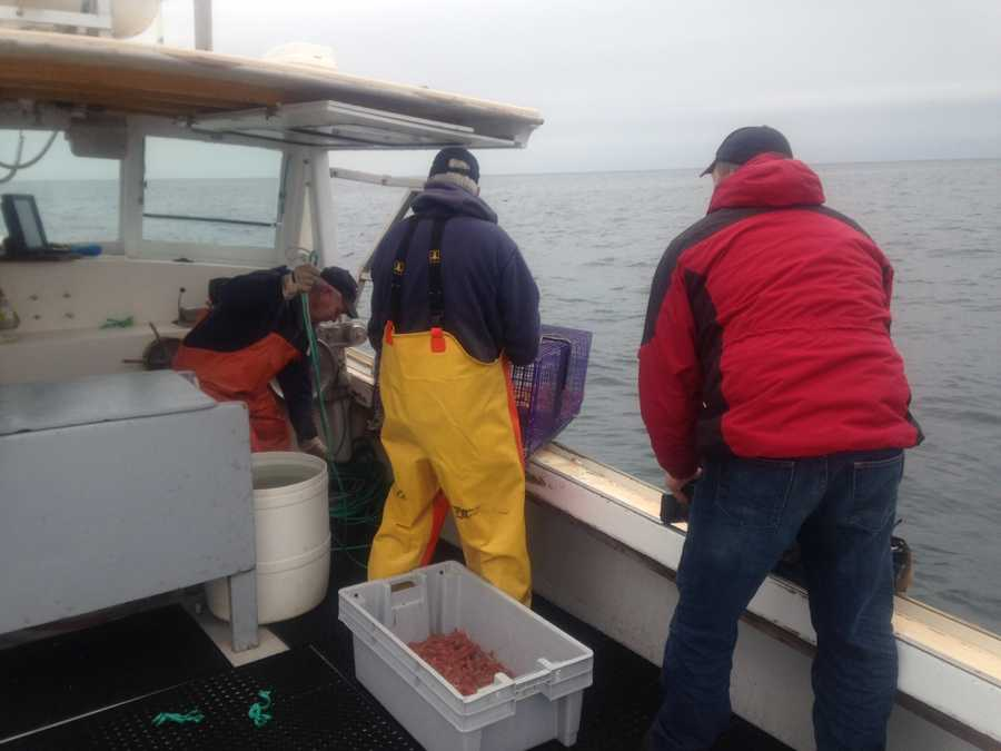 Wednesday at 5:30 p.m. on WMTW News 8 learn more about the work the fishermen are doing with biologists, and why Gamage is more optimistic about next season than the biologists.