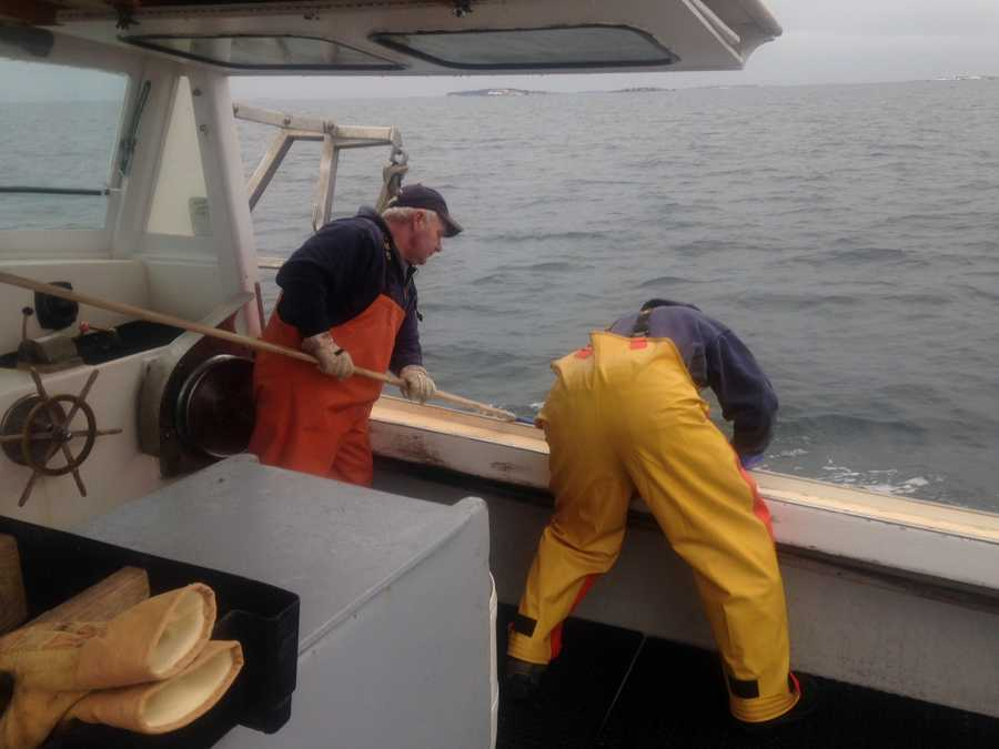 Gamage and Tim Ross were granted special permission from the state to catch the shrimp.