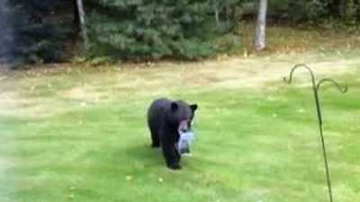 A bear in Lancaster decided to take food to go, walking off with a backyard bird feeder.