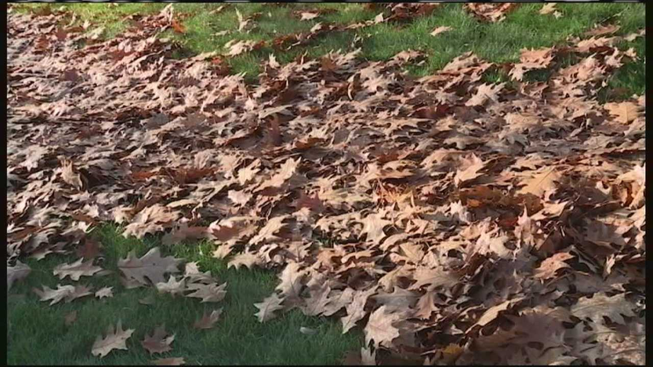 The mild-November weather may be a perfect time to get yard work complete, but do you really have to? Some experts say you can leave the leaves, and let nature take its course.