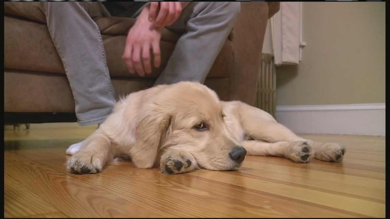 Brewer, a golden retriever puppy, was shaken after his owner says he was kicked by a stranger in Augusta. Now, hundreds of people are using social media to find the man that allegedly kicked Brewer. WMTW News 8's Courtney Sturgeon reports.