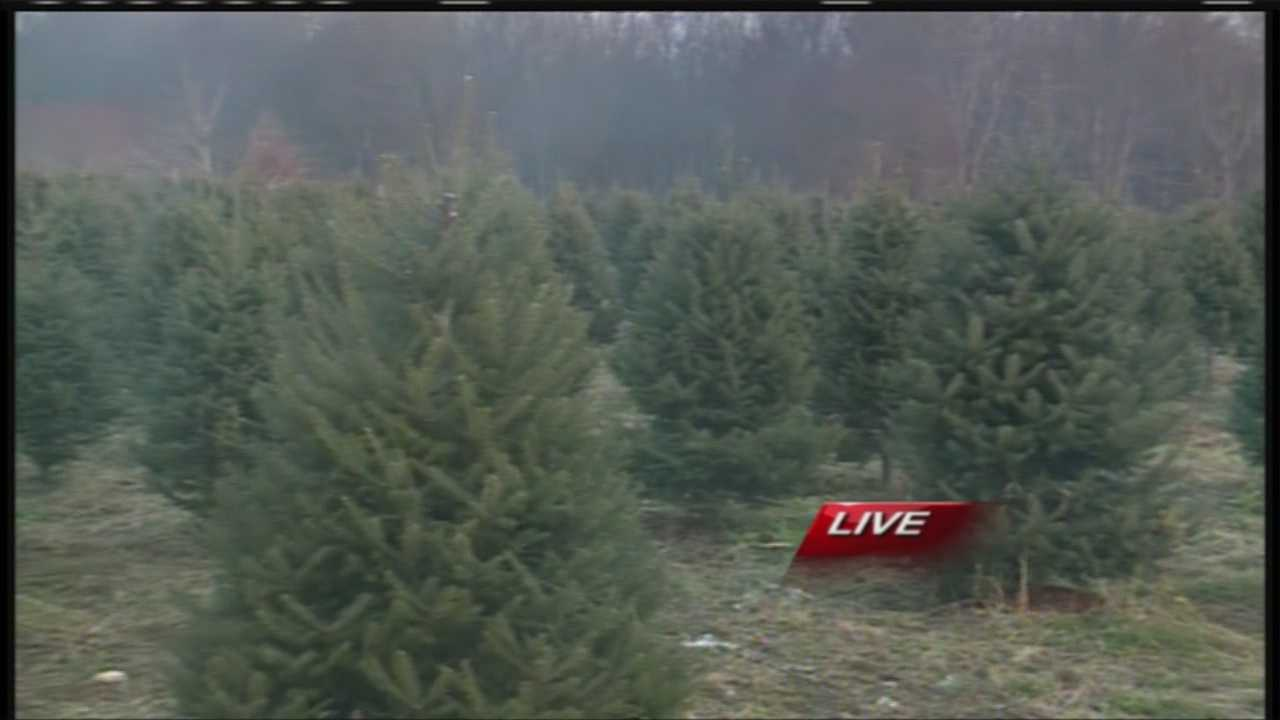 With about 2 weeks until Christmas you still have time to get that perfect tree for your home, but how do you know what to look for? News 8's Morgan Sturdivant talks with Doug Fortier from Merry Christmas Tree Farm with some tips and ideas.