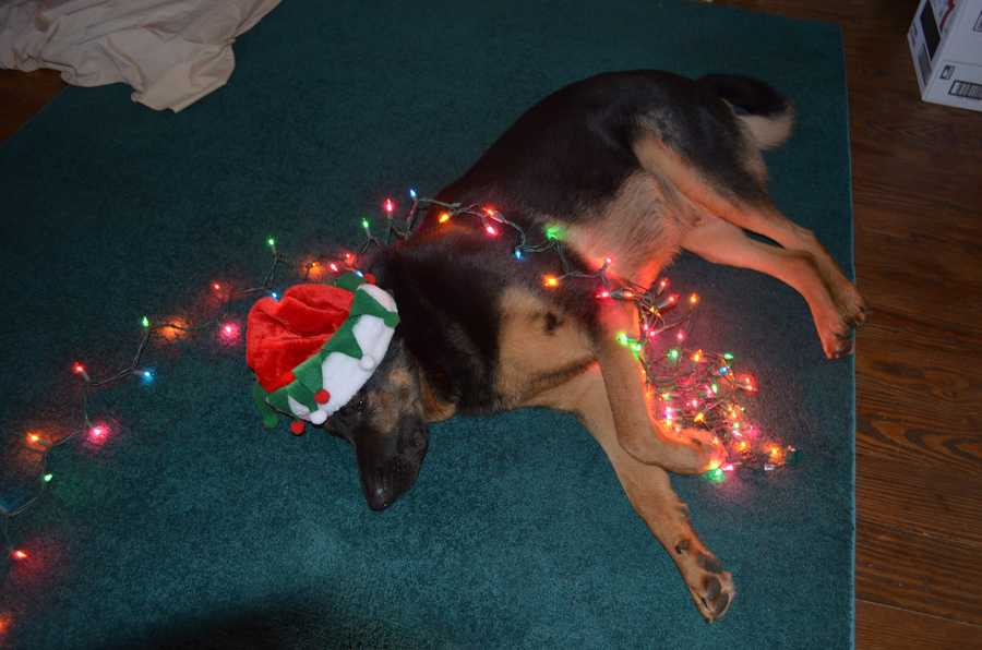 Tobias is a bit tired of Christmas lights.