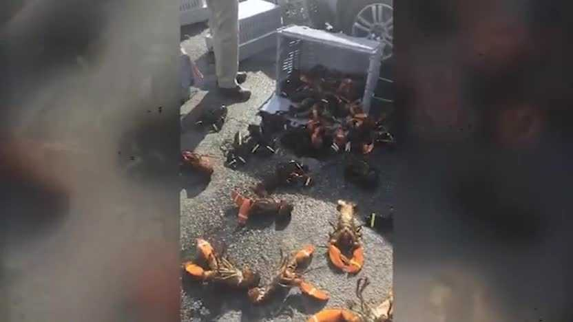 A truck carrying lobster lost its load Saturday afternoon on Portland's Commercial Street. (Video: Molly Morse)