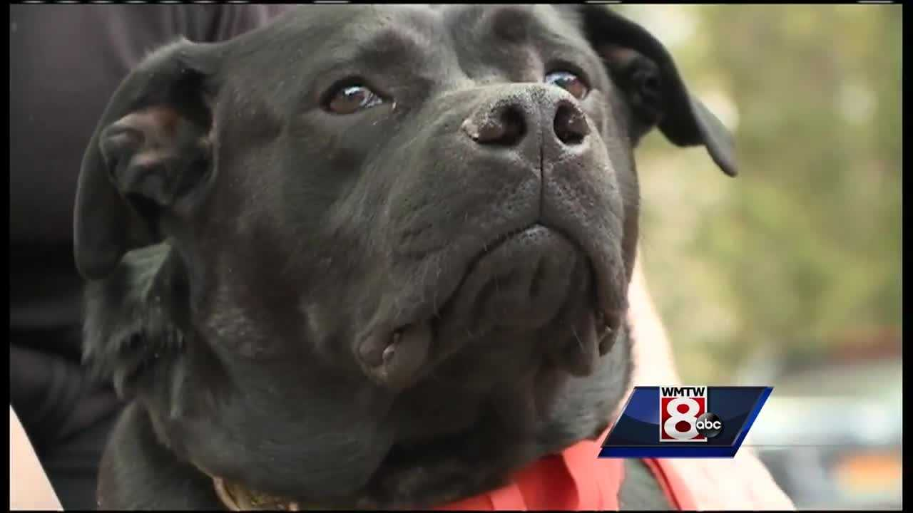 A black Labrador named 'Buddy' who lost his leg because of abuse is moving to Michigan to help rehabilitate prisoners.