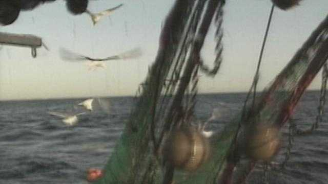 Commercial Fishing, Nets - 14435994