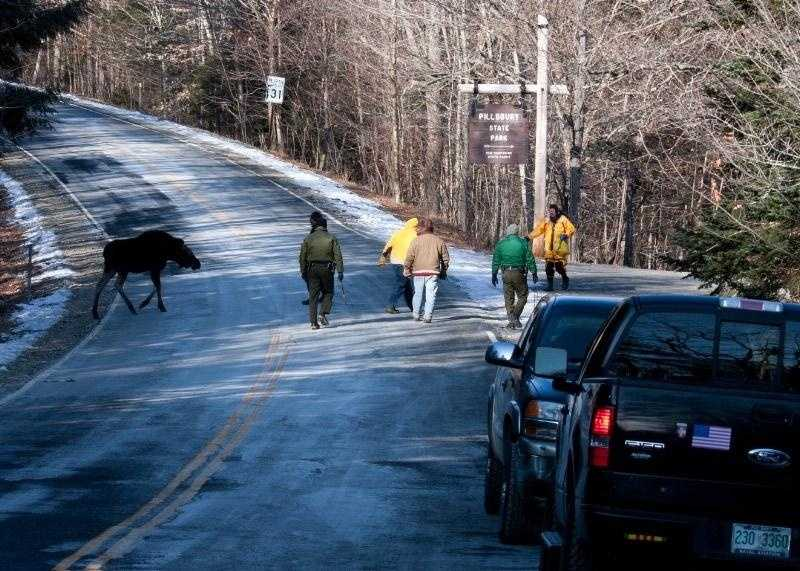 Washington firefighters and conservation officers coax the moose off Route 31 and into the woods.