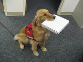 HB 398 - This law defines service animals. - Takes effect Jan. 1, 2012
