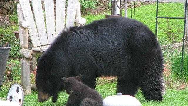 "uLocal users ""mikeandsteve23"" sent in this photo of two bears in their backyard."