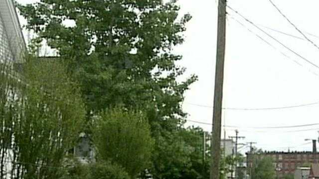An elderly woman says several items were stolen by scammers posing as tree-cutters