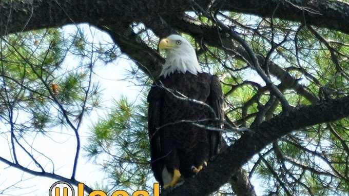 Eagle u local