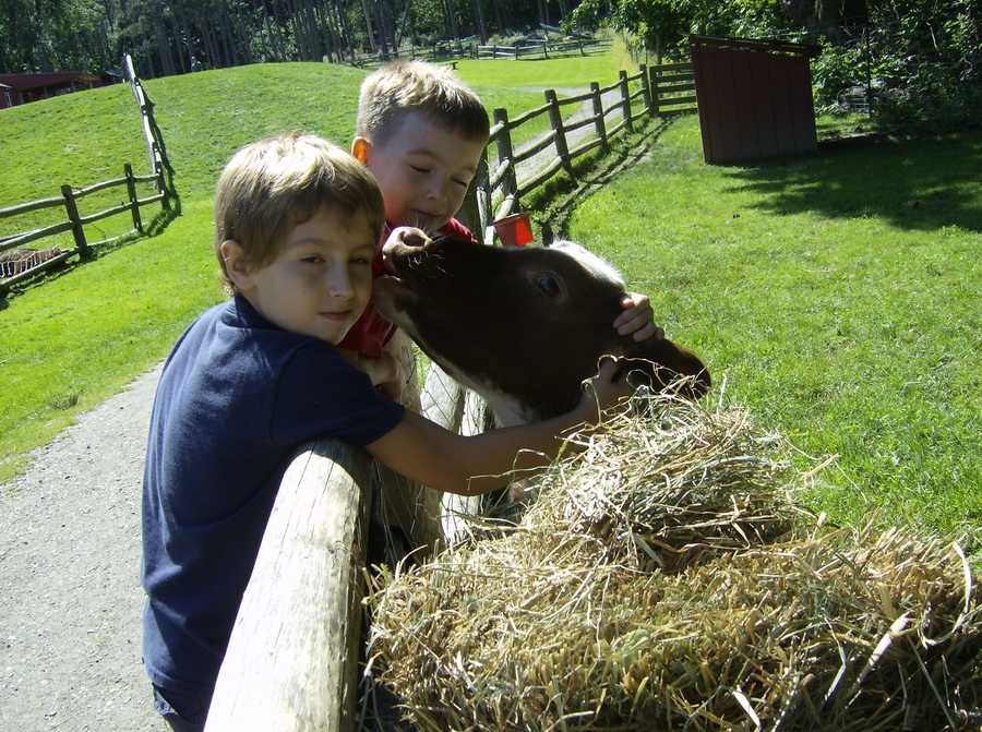 No. 8: Friendly Farm