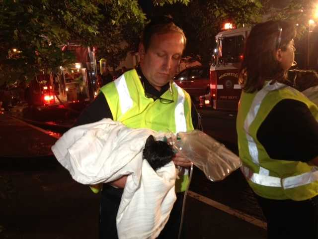 A rescued cat receives oxygen from emergency crews.