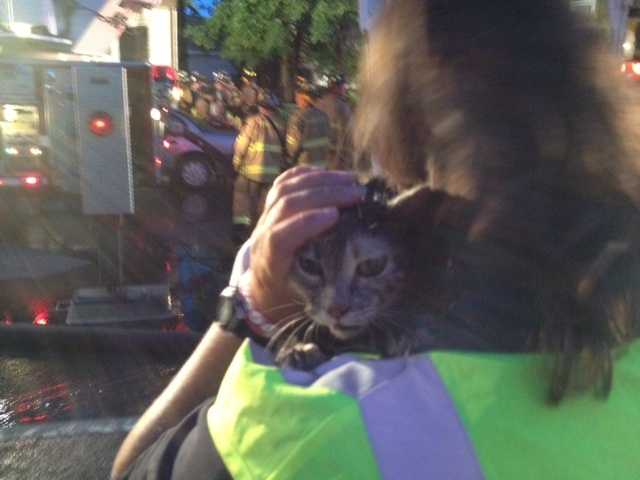 Classy is one of two cats rescued from the Central Street fire.