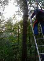 The skydiver had just jumped from 13,500 feet before becoming trapped in this tree in Maine.