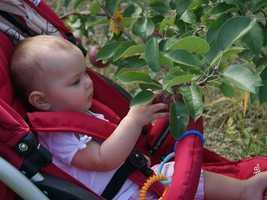 No. 12 (tie): Brookdale Fruit Farm in Hollis, N.H.