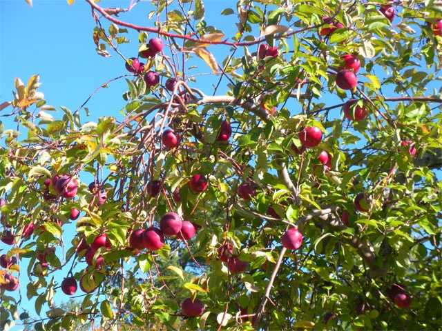 No. 9: Hackleboro Orchards in Canterbury, N.H.