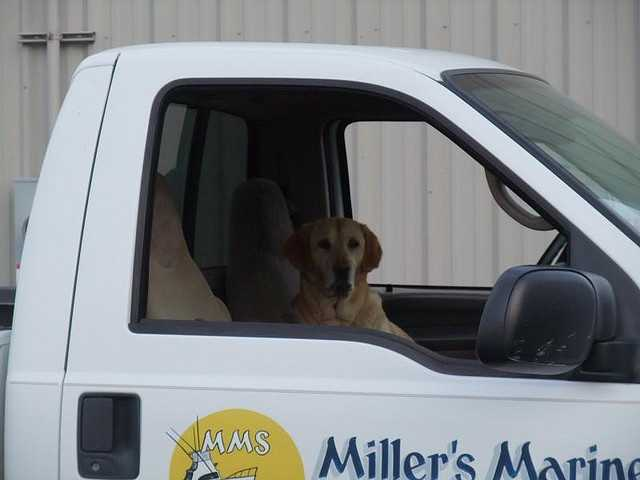 True or False? Carrying dogs in pickup trucks is allowed.