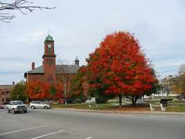Some of you went with a simple choice: the foliage you see every day in your home town.