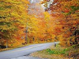 Many others mentioned the foliage that can be seen while driving on any of the state's roadways.