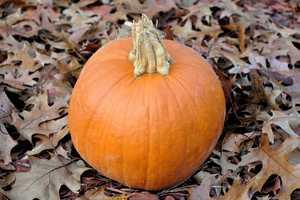 It's fall, so that means it's pumpkin season!