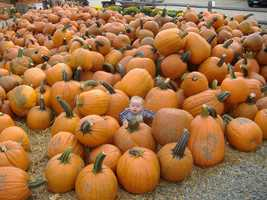 Now that you've picked your pumpkins...